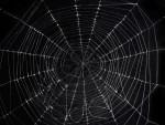 http://www.bradleybenedetti.com/files/gimgs/th-4_magickwindows_webimg_web.jpg